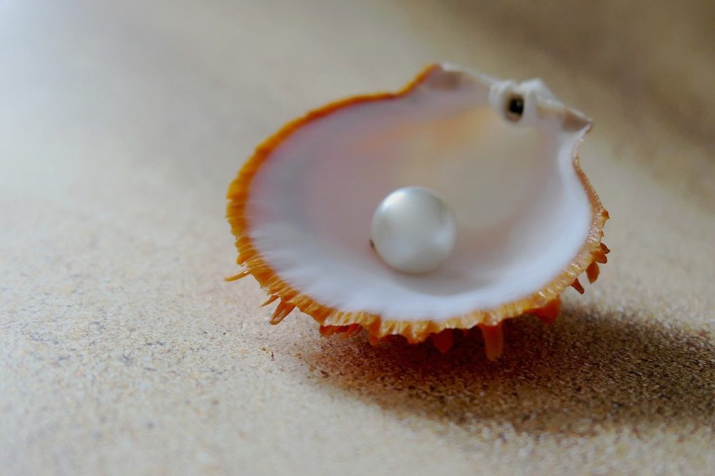 Muschel mit großer weißer Perle
